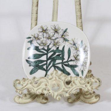 Arabia Botanica koristelautanen, Suopursu, suunnittelija Esteri Tomula, Suopursu, pieni, serikuva