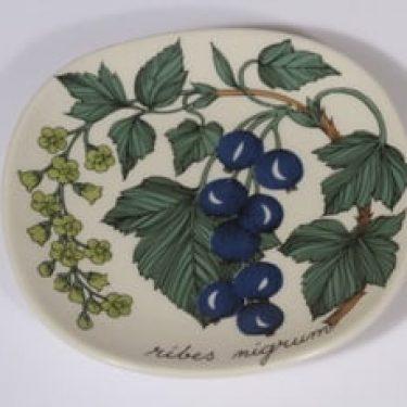 Arabia Botanica koristelautanen, Musta viinimarja, suunnittelija Esteri Tomula, Musta viinimarja, pieni, serikuva