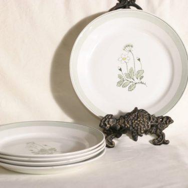 Arabia Suvi lautaset, matalat, 5 kpl, suunnittelija , matalat, käsinmaalattu