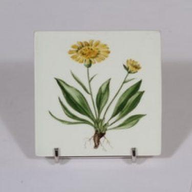 Arabia Niittykukka koristelaatta, Icorzonera hiirilis, suunnittelija Svea Granlund, Icorzonera hiirilis, pieni, käsinmaalattu, kukka-aihe