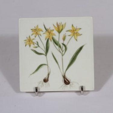 Arabia Niittykukka koristelaatta, Gagea liilea, suunnittelija Svea Granlund, Gagea liilea, pieni, käsinmaalattu, kukka-aihe