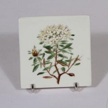 Arabia Niittykukka koristelaatta, Ledum patistre, suunnittelija Svea Granlund, Ledum patistre, pieni, käsinmaalattu, kukka-aihe