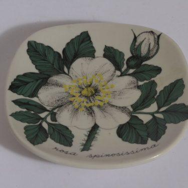 Arabia Botanica koristelautanen, Valkoinen ruusu, suunnittelija , Valkoinen ruusu, pieni, serikuva