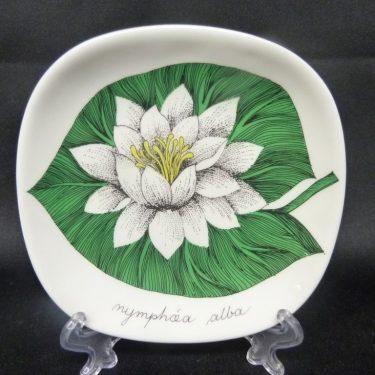 Arabia Botanica koristelautanen, Valkolumme, suunnittelija , Valkolumme, pieni, serikuva