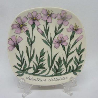 Arabia Botanica koristelautanen, Ketoneilikka, suunnittelija , Ketoneilikka, pieni, serikuva