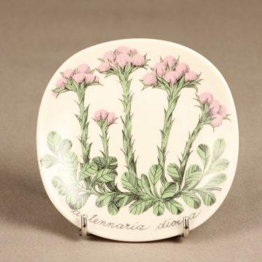 Arabia Botanica koristelautanen, Kissankäpälä, suunnittelija Esteri Tomula, Kissankäpälä, serikuva, kukka-aihe