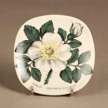 Arabia Botanica koristelautanen, Rosa Spinosissima, suunnittelija Esteri Tomula, Rosa Spinosissima, serikuva, kukka-aihe
