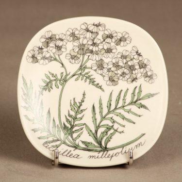 Arabia Botanica koristelautanen, Siankärsämö, suunnittelija Esteri Tomula, Siankärsämö, serikuva, kukka-aihe