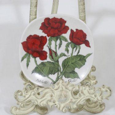 Arabia Botanica koristelautanen, Rosa polyantha, suunnittelija Esteri Tomula, Rosa polyantha, pieni, serikuva