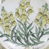Arabia koristekuvio Botanica