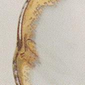 Arabia koristekuvio Hienohelma