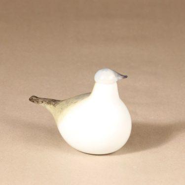 Nuutajärvi lintu , Västäräkki yrityslintu