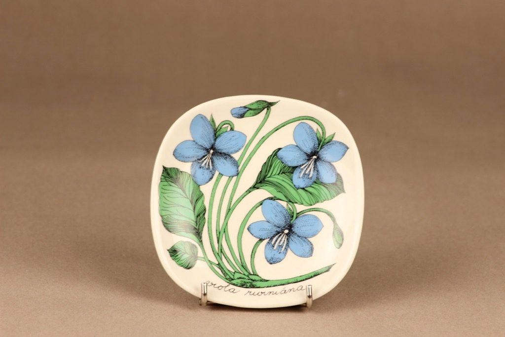 Arabia Botanica koristelautanen, Metsäorvokki, suunnittelija Esteri Tomula, Metsäorvokki, kukka, viola riviniana